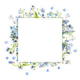 Forget-me-not blue forest flowers - nature square background Royalty Free Stock Photography