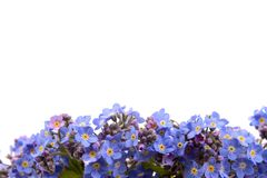 Forget me not border Royalty Free Stock Image