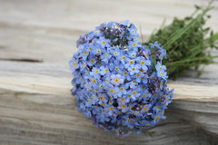 Forget-me-not bouquet Royalty Free Stock Photography