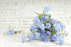 Forget-me-not. Bunch of forget-me-not on wooden background stock photography