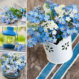 Forget me not collage Royalty Free Stock Images