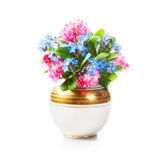 Forget me not and currant flowers in vase Royalty Free Stock Images