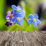 Forget me not and empty wooden deck table. Royalty Free Stock Photography