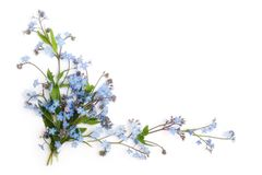 Forget-me-not (floral Ornament Stock Photography