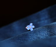 Forget-me-not flower Stock Photos