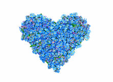 Forget-me-not flower heart. Arrangement of blue Forget-me-not flowers in the shape of a heart.  White background Royalty Free Stock Photo