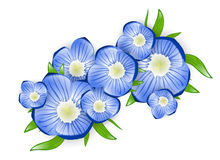 Forget me not Flower Royalty Free Stock Photography