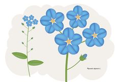 Forget-me-not flower Stock Image