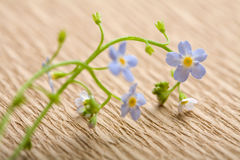 Forget me not flower over recycled paper Stock Photo