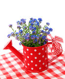 Forget-me-not flowers Stock Image
