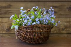 Forget-me-not flowers in the basket Royalty Free Stock Photo
