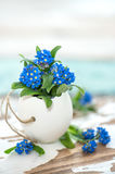 Forget me not flowers Easter decoration. Forget me not flowers in egg shell. Easter decoration Stock Images