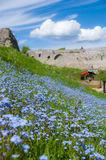 Forget-me-not flowers field in park Stock Photography