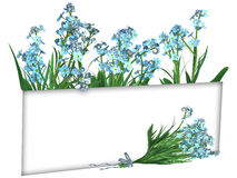 Forget-me-not Flowers, frame Royalty Free Stock Images