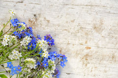 Forget me not flowers. Forget-me-not flowers frame on an old wooden background with copy space Royalty Free Stock Images