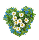 Forget me not flowers heart white background. Forget me not flowers in heart shape on white background. Mothers Day Stock Image