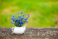 Forget-me-not flowers in porcelain pot Royalty Free Stock Images