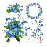 Forget-me-not flowers setΠStock Images