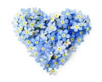 Forget-me-not flowers  in a shape of a heart. Isolated on white Stock Photos