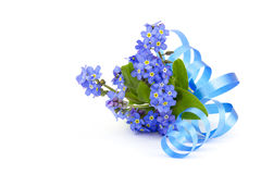 Forget me not flowers Royalty Free Stock Photos
