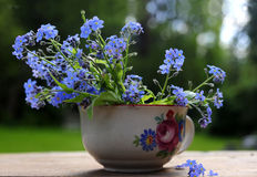 Forget-me-not in the garden Royalty Free Stock Photos