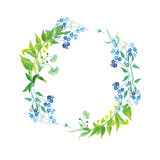 Forget-me-not and herb watercolor round vector frame Stock Photography