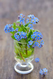 Forget-me-not [Myosotis sylvatica] Royalty Free Stock Images