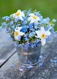 Forget-me-not and narcissus flowers Stock Image