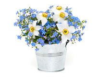 Forget-me-not and narcissus flowers over white Royalty Free Stock Photos