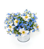 Forget-me-not and narcissus flowers over white Stock Image