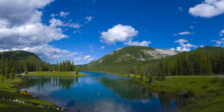 Forget Me Not Pond Panorama Royalty Free Stock Photo