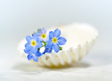Forget.me-not on shell Royalty Free Stock Photos