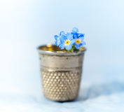 Forget-me-not in a thimble Stock Images