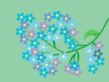 Forget-me-not wildflowers branch flowers Stock Images