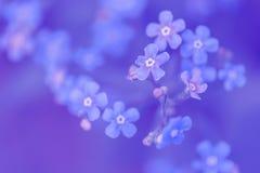 Forget-me-nots on a blue background. Art image blue colors. Selective focus.