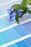 Forget-me-nots on color swatch Stock Photo