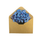 Forget-me-nots in the envelope. Flowers in the envelope. isolated on a white background. love letter. spring flowers Royalty Free Stock Photo