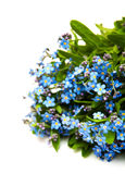 Forget-me-nots flowers Royalty Free Stock Image