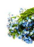 Forget-me-nots flowers Stock Photography