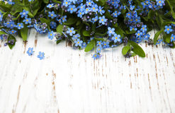 Forget-me-nots flowers Stock Photos