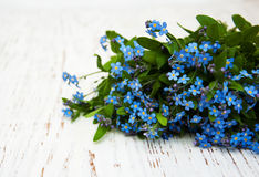 Forget-me-nots flowers Stock Photo