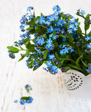 Forget me nots flowers Stock Photos