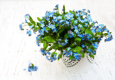 Forget me nots flowers Stock Photo