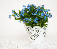 Forget me nots flowers Royalty Free Stock Image