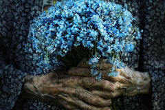 Forget Me Nots Royalty Free Stock Image