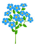 Forget-me-nots isolated on white background. Vector illustration Royalty Free Stock Photos