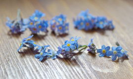 Forget me nots lying on the wooden table Stock Photos