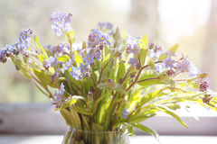 Forget-me-nots or  Myosotis Royalty Free Stock Photos