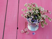 Forget me nots on pink Royalty Free Stock Photos