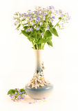 Forget-me-nots in a  vase. Bouquet of forget-me-nots in a  vase on a white background Royalty Free Stock Photo